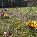 Dirk Fornahl hat Blumen im Garten